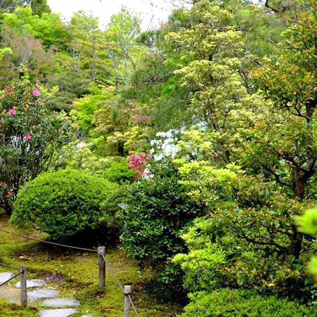 画像: 書院から奥へと続く庭園。春はあせび、シャクナゲ、桜、つつじと次々と咲く花に迎えられます。初夏には新緑、秋の紅葉、冬の雪景色と一年中楽しめるお庭です。