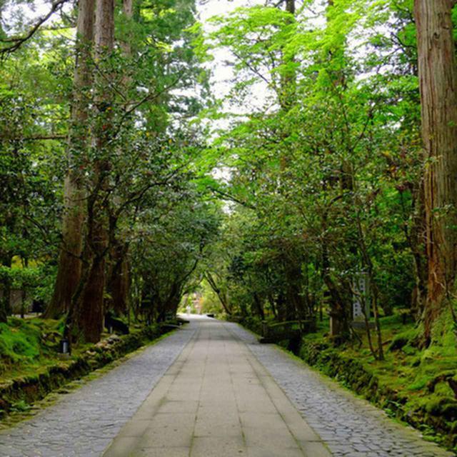 画像: いよいよ本殿の方へと向かいます。まっすぐ続く参道脇の新緑と苔。空気がきれいで癒されます…!