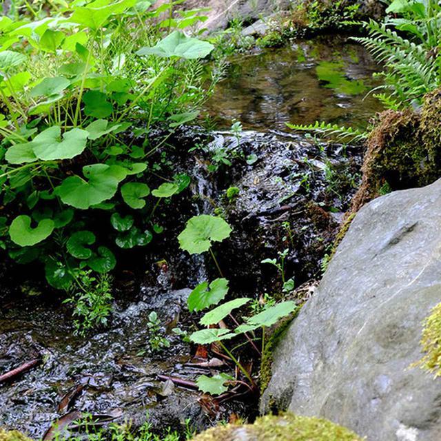 画像: 山水豊富で清らかな川が庭の中を流れます。4月には水芭蕉が美しく咲き誇ります。