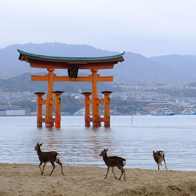 画像: 見終わる頃にはあいにくの天気となってしまいましたが、元気に走り回る鹿の家族が仲良さそうでした。