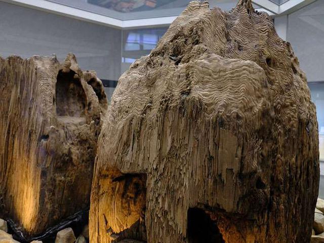 画像: まず入口から入ってすぐには「宇豆柱」。2000年、伝説だと思われていた巨大神殿の柱が実際に地中から発見されました。これらは、巨木丸太3本を束ねて1本とした柱により、48メートルもの高さの高層神殿を建てていた可能性を示唆しています。