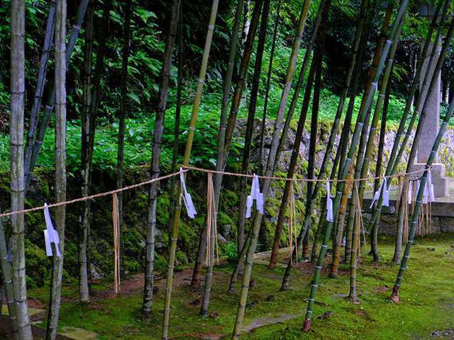 画像: 竹にしめ縄がかかっている不思議なスポット、御神竹。