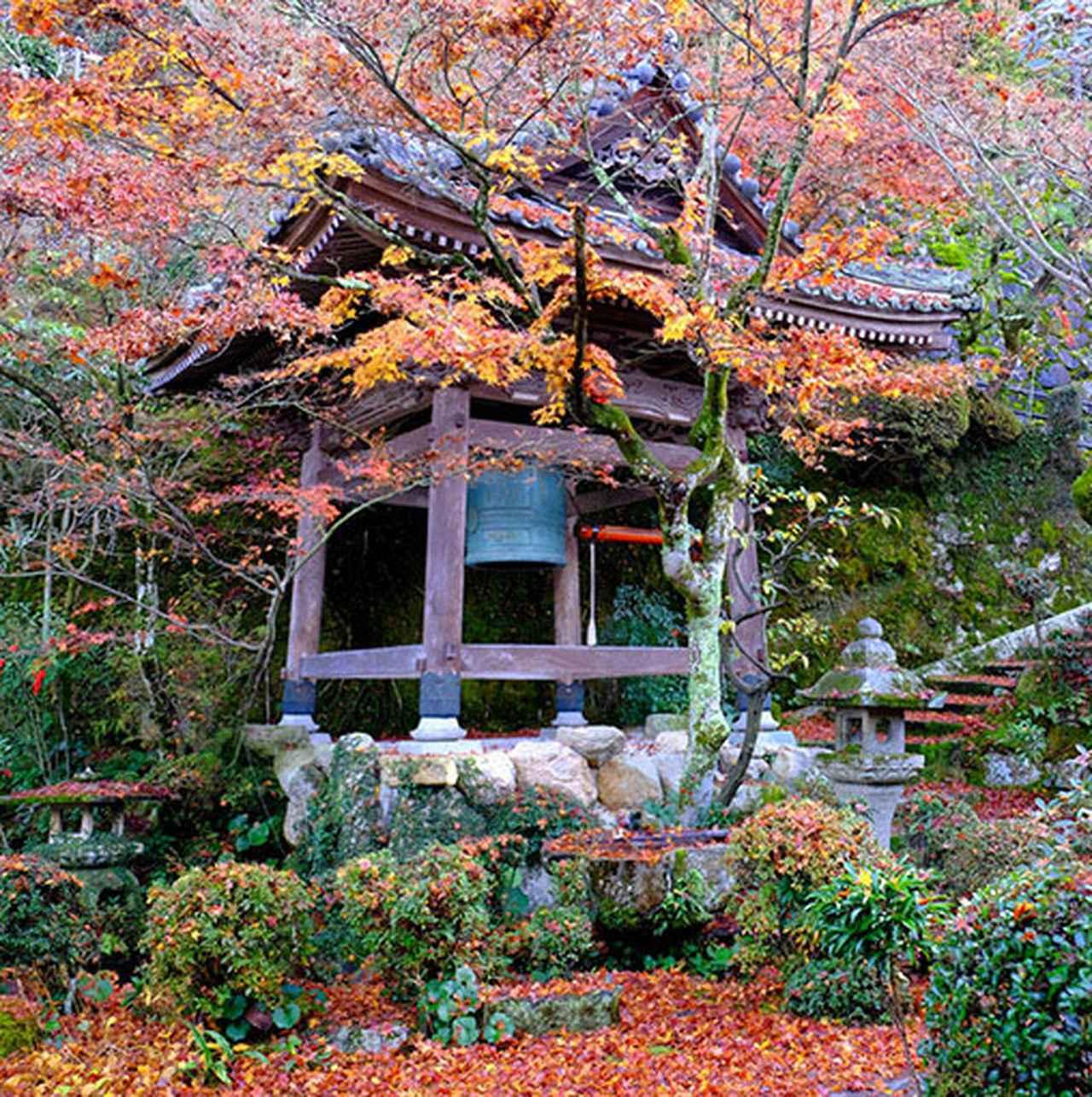画像: 結構奥まっているので人は少なかったですが、散りもみじがとても美しいお寺でした。