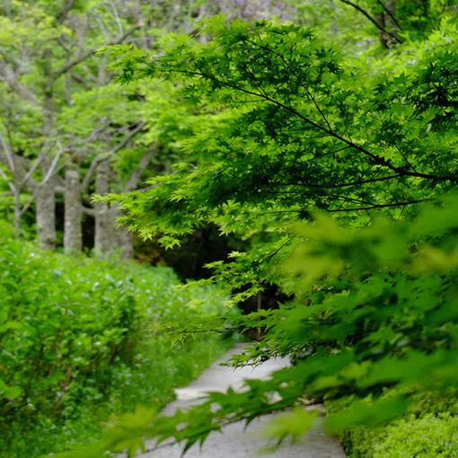 画像: 360度、緑に包まれながら山の細道を歩くように境内をまわります。