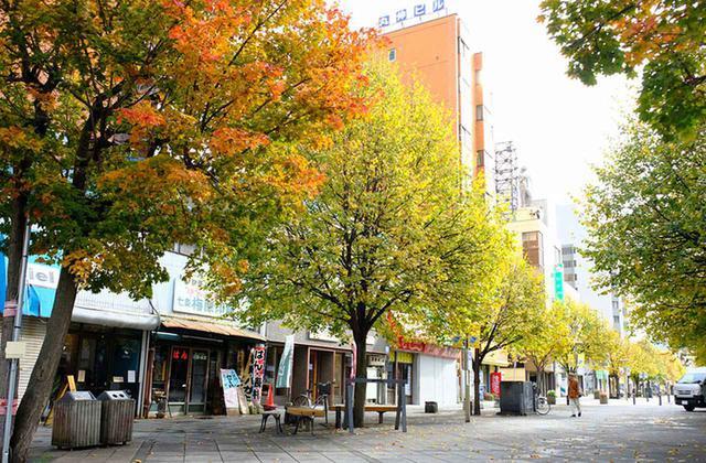 画像: 旭川平和通りは紅葉真っ盛り。街中にたくさんの街路樹が植えてあり自然の多い街です。