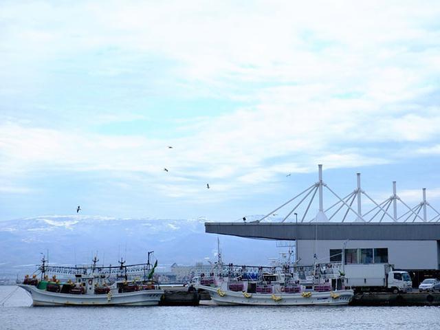 画像: 時間はまだ6時前。朝の函館港はすっきりとキレイな空気、カモメが飛び交う静かな漁港でした。