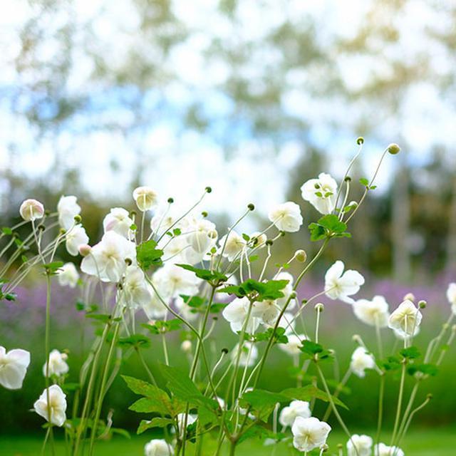 画像: 上野ファームでよくアイコンになっている景色。まだお花咲いていて良かった。