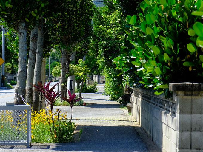 画像: 久米島の道は植物が両脇から迫ってきていて決して走りやすくはありません。安全運転でお願いします!
