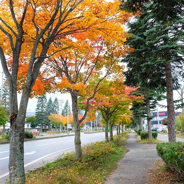 画像: 街中でもすでに紅葉が始まっていました。関東と比べると北海道は1.5カ月か2カ月くらい早く進んでいる感じです。