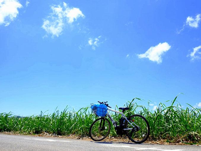 画像: さとうきび畑とともに。まるで自分の愛車のような気分です。写真映えもしてカッコイイです。