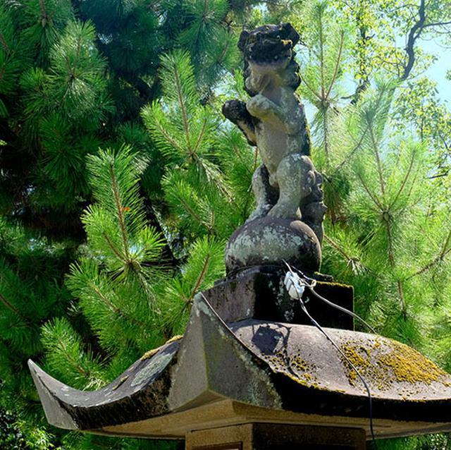 画像: 石灯籠の上に立ち上がっている狛犬。初めて見た!