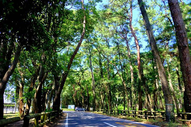 画像: 唐津の虹の松原。松林に心が落ち着きますね。