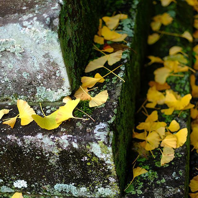 画像: この神社の鬼瓦と彫刻がものすごい迫力なのです。加えて、境内の古びた雰囲気が最高です。