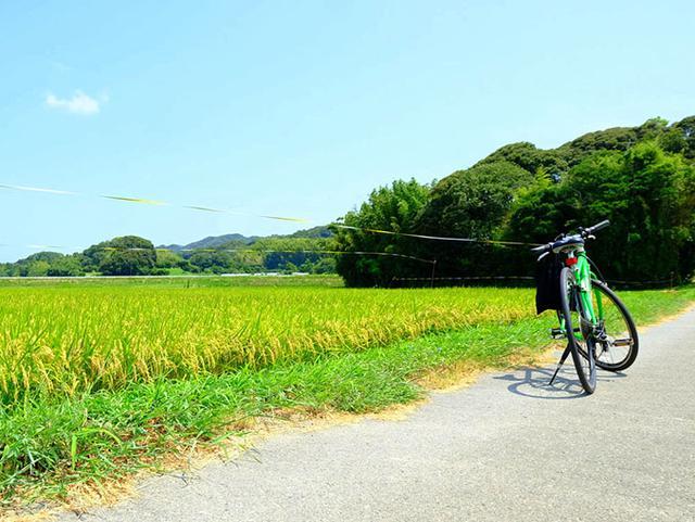 画像: 青々しい実りの中で我がレンタサイクルとともに。徐々にのどかになってゆく景色、糸島の豊かさを体いっぱいに感じられました。
