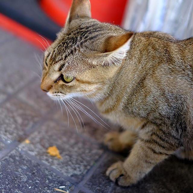 画像: 唐津猫。ごはんをもらってます。