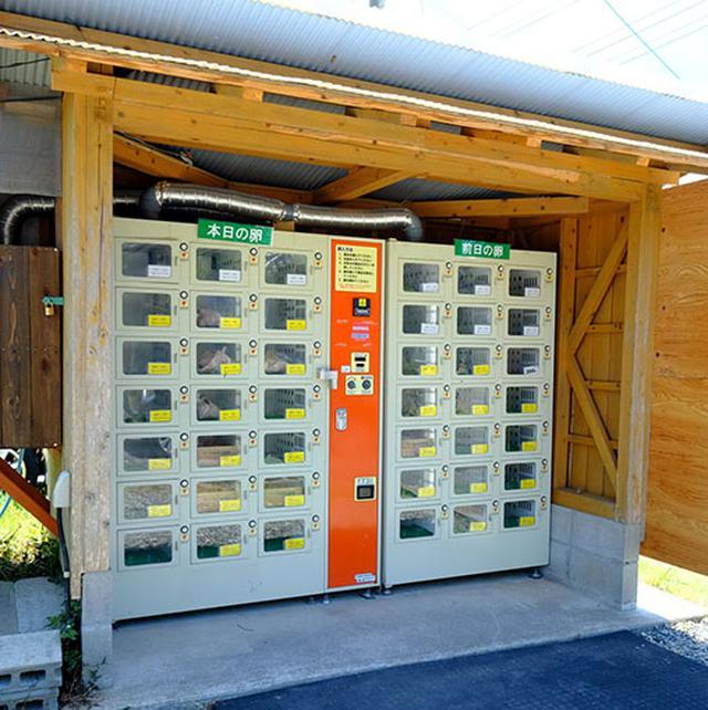 画像: カフェの近くにはたまごの自動販売機もありましたよー。