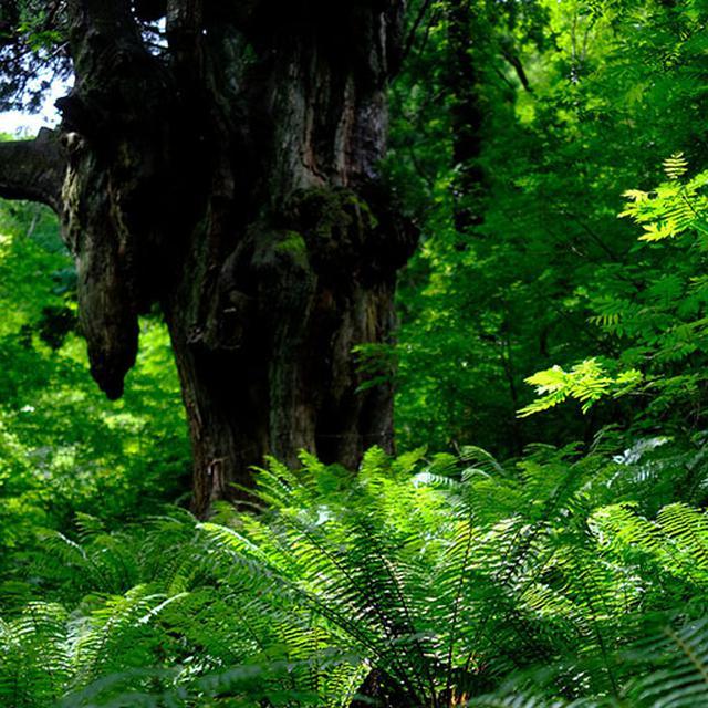 画像: 木の根元付近には大きなシダが生育していて、まるで原始時代を描いた映画の世界。奥から恐竜が出てきそうでした。