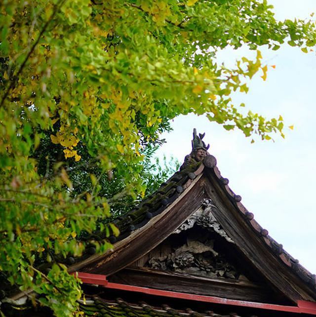 画像: 最後にもう一度鬼瓦に挨拶して帰りました。この神社は迫間橋とセットで見ることができるスポットです。