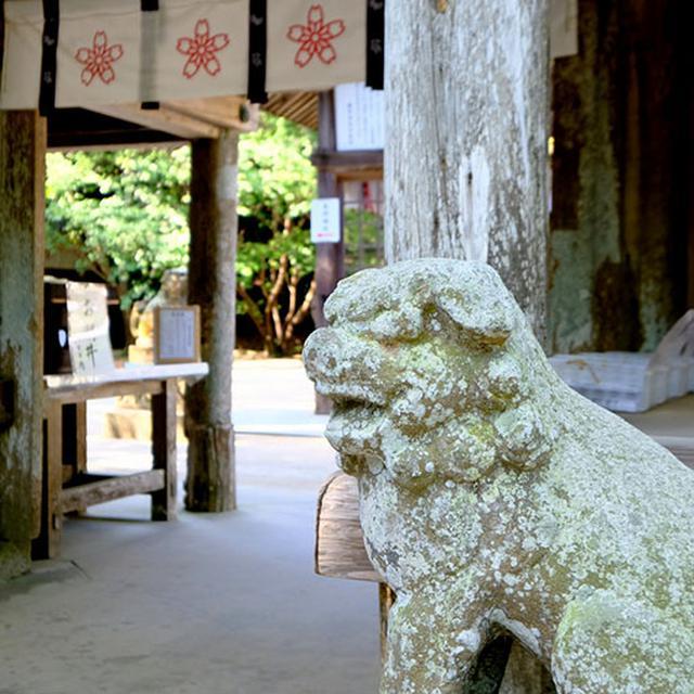 画像: ここは「伊勢神宮」と関係性が深く、「伊勢神宮」が20年ごとの式年遷宮を行う際に取り外した鳥居は、実はこの「桜井神社」に運ばれその後の余生を送っているのです。また伊勢二見ヶ浦が朝日を拝む場所であるのに対して桜井二見ヶ浦は夕陽の拝所であることなど伊勢と糸島が一対になっているかのような関係を持つのです。