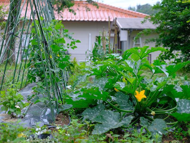 画像: 家庭菜園もありました。お庭広いです。