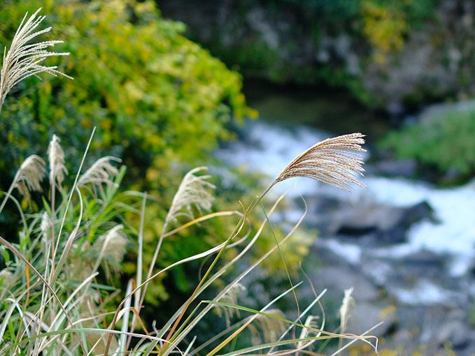 画像: 水も清らかでとても静かな渓谷です。豊かな水量で菊池川へ流れ込みます。