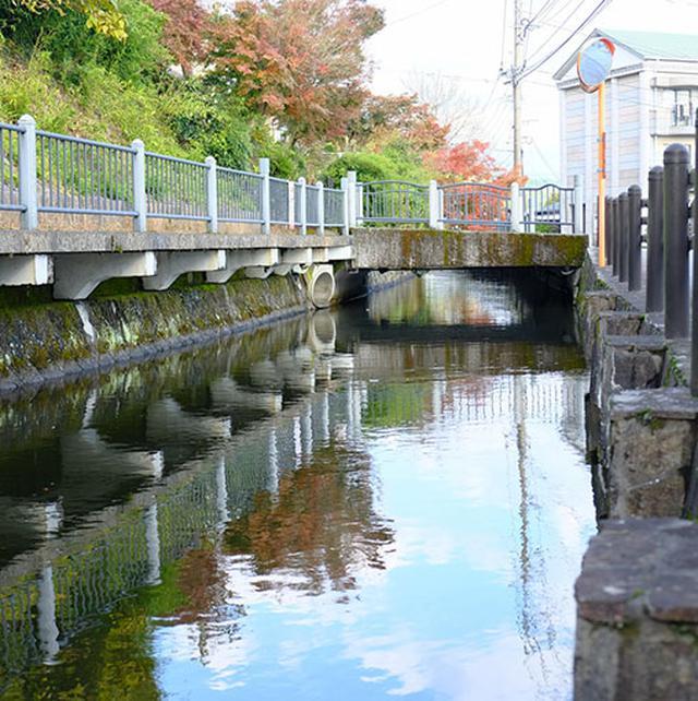 画像: 加藤清正の時代に造られた用水路。人が住んでいるところに流れている事が信じられないくらいにきれい。