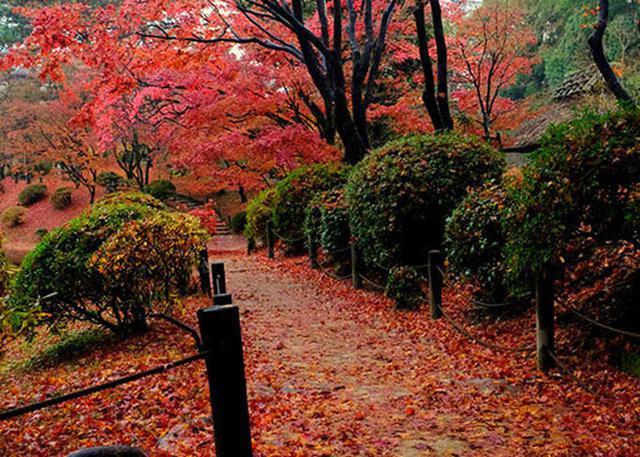 画像: 広島空港から行く瀬戸内の絶景を探す旅(後編)