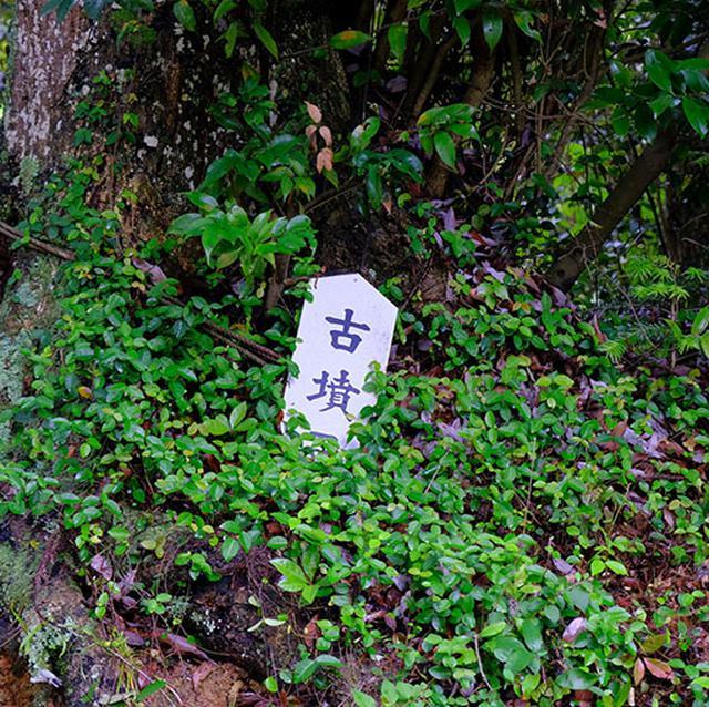 画像: 玉若酢命神社の脇から裏山には古墳群があります。