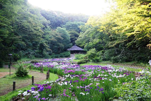 画像1: 昭憲皇太后のために造られた菖蒲田