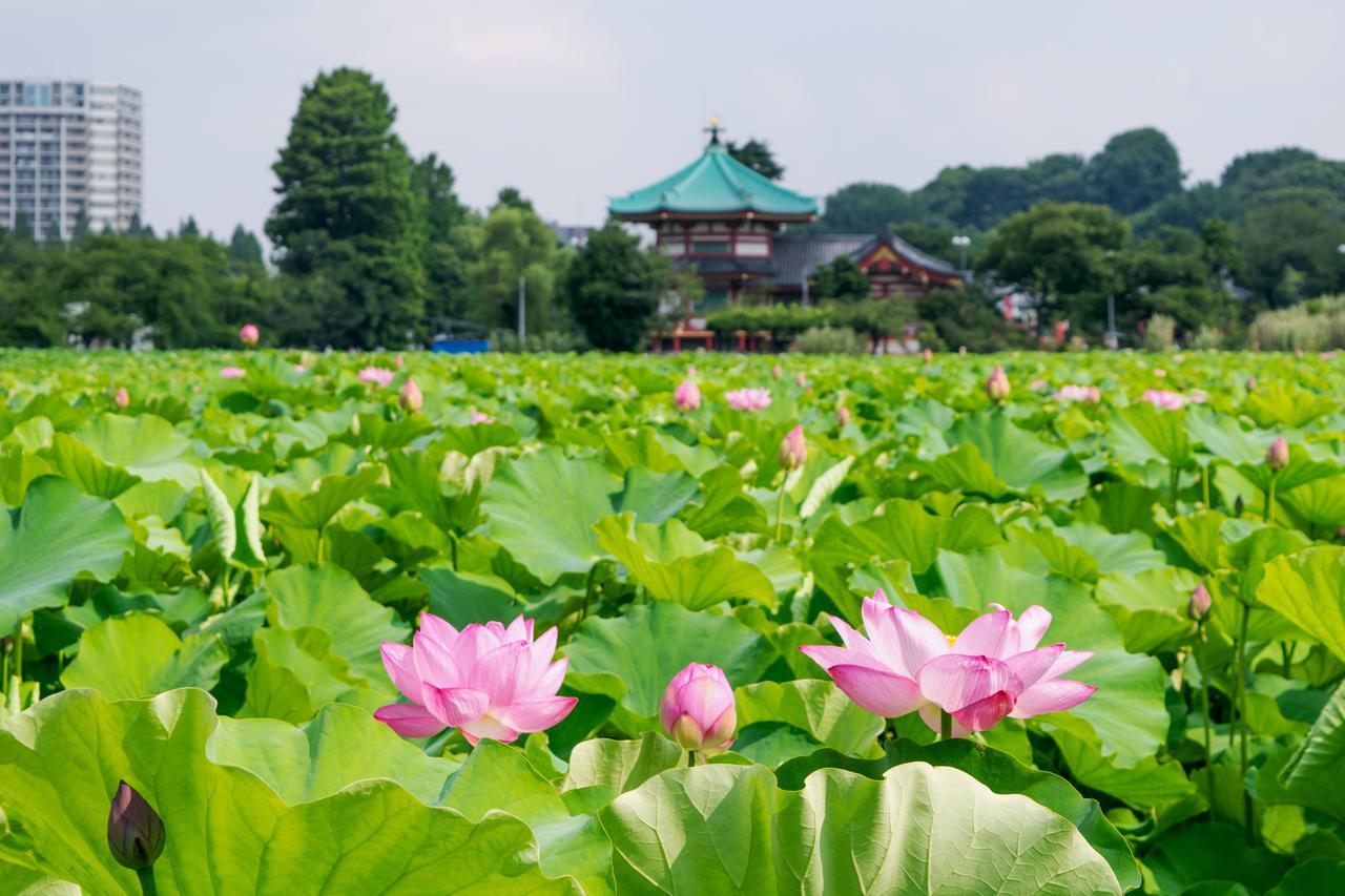 画像: 「上野恩賜公園」の不忍池でのんびり憩う