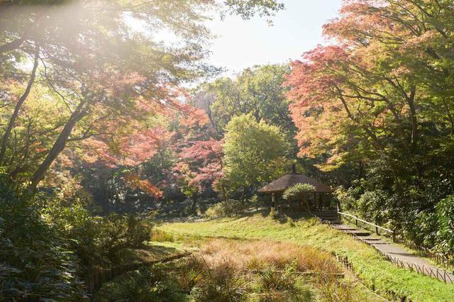 画像2: 昭憲皇太后のために造られた菖蒲田