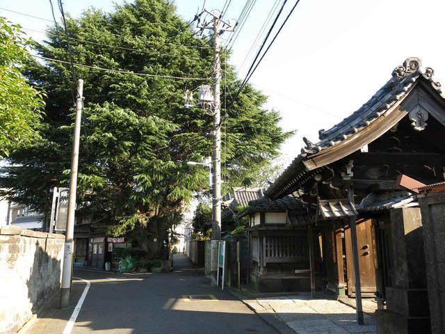 画像: 【上野でお散歩3】谷中でのんびり下町コース