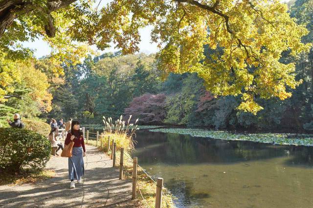 画像: 木々に囲まれた優雅な池