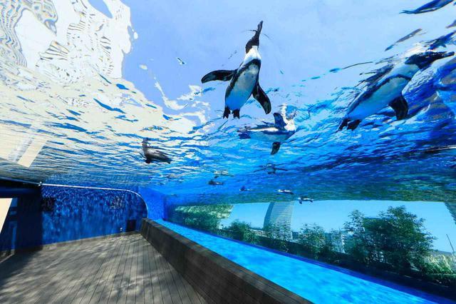 画像: E-2「サンシャイン水族館」で水中世界にうっとりする