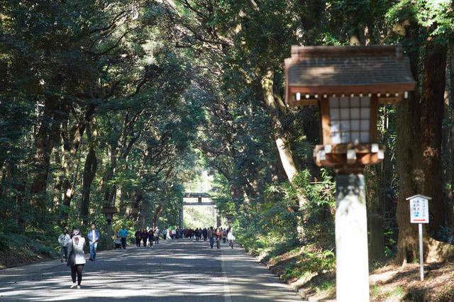 画像: B-5「明治神宮」で大都会の森を感じる