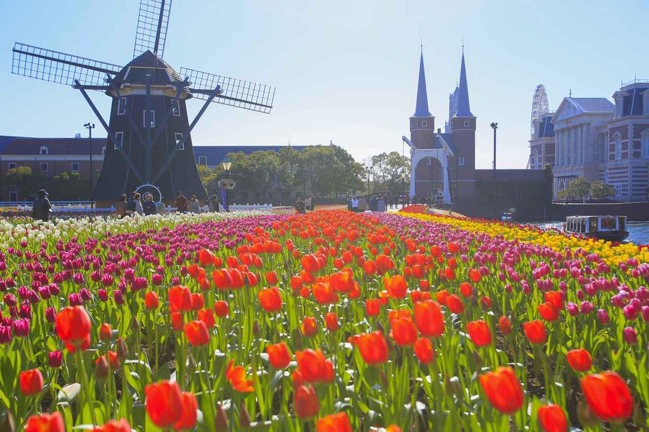 画像1: 風車とお花畑の組み合わせが美しい「フラワーロード」
