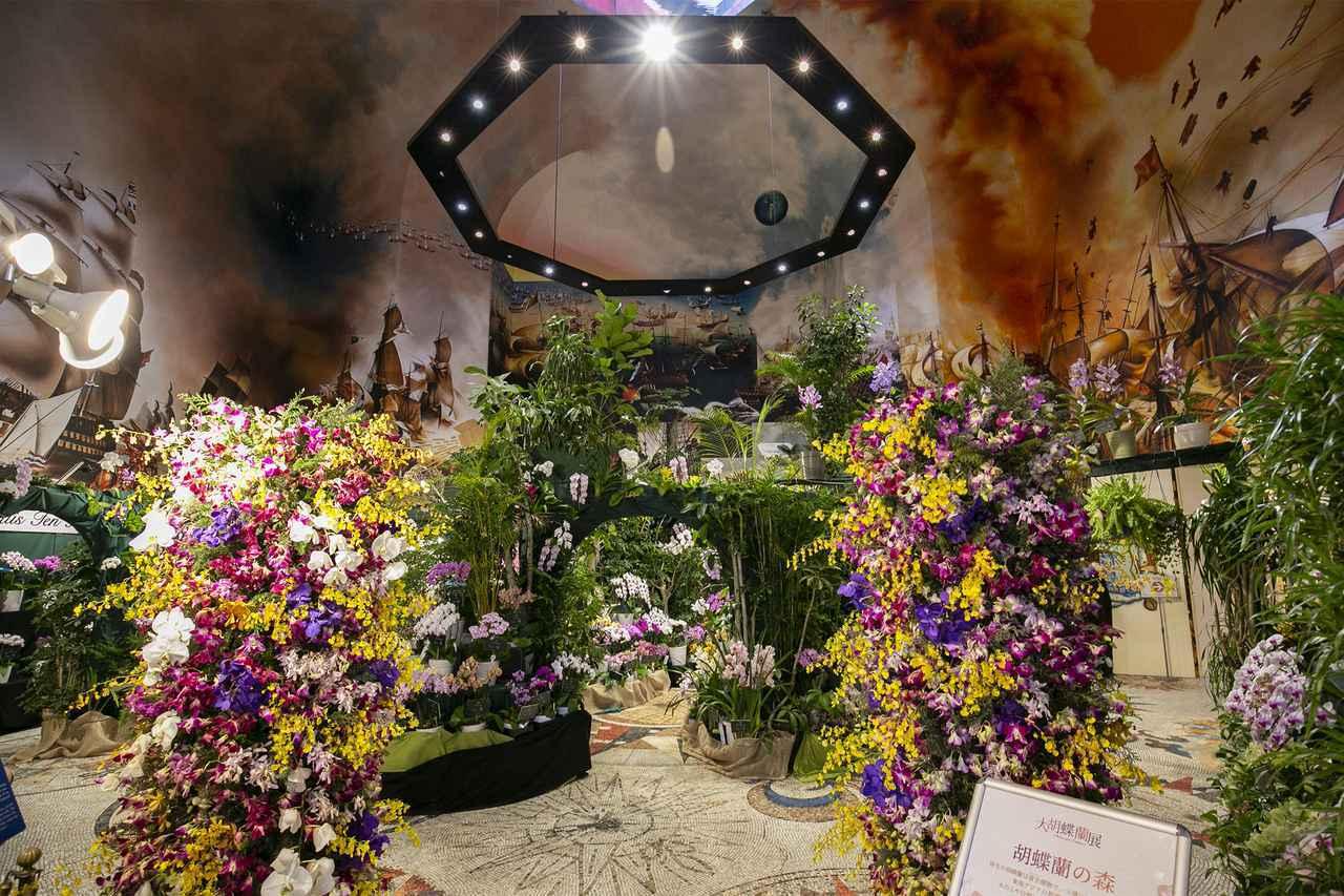 画像1: 春先のチューリップに冬の胡蝶蘭、季節の花に見惚れる