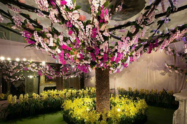 画像2: 春先のチューリップに冬の胡蝶蘭、季節の花に見惚れる
