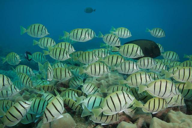 画像: さまざまな魚や海の生き物を間近に観賞できます (c) Shutterstock.com
