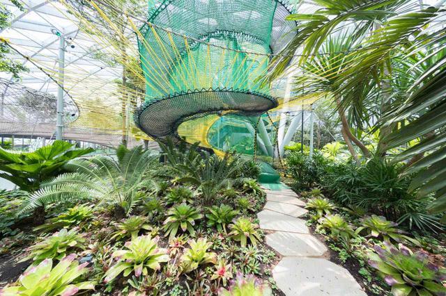 画像: キャノピー・パークには植物園のほか、巨大ネットなどのスポットも 写真提供:Changi Airport Group