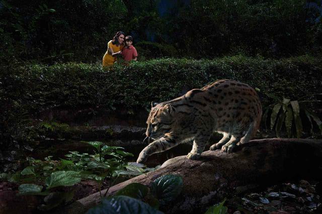 画像: 徒歩で巡るコース(トレイルコース)が見学できる動物ごとに設定されています Photo:Wildlife Reserves Singapore