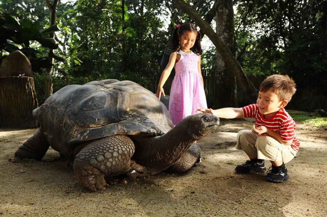 画像: カメやキリン、シロサイなどの動物への餌やり体験もあります Photo:Wildlife Reserves Singapore