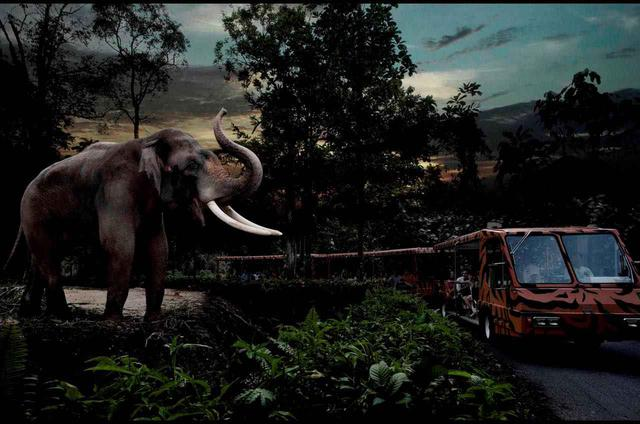 画像: トラムから夜の動物たちを至近距離で観察 Photo:Wildlife Reserves Singapore