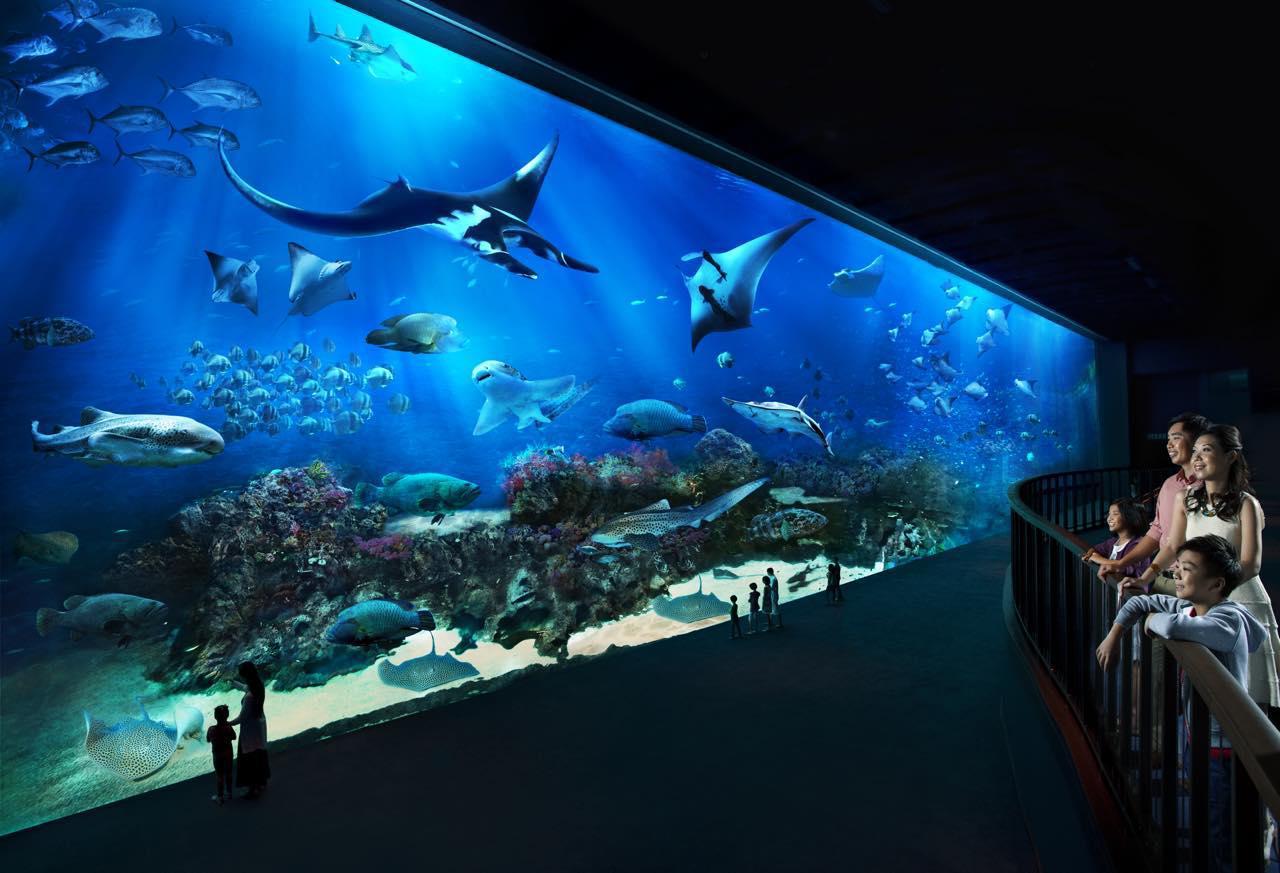 画像: シー・アクアリウムは世界最大級の巨大水槽が見もの。家族連れにも好評です