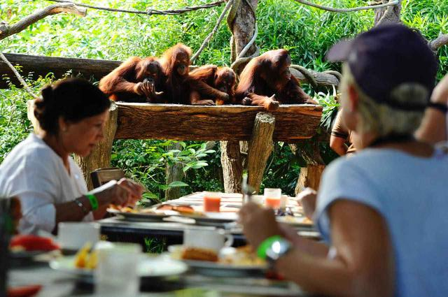 画像: アーメン・レストランの朝食ビュッフェは人気なので事前の予約がおすすめ Photo:Wildlife Reserves Singapore