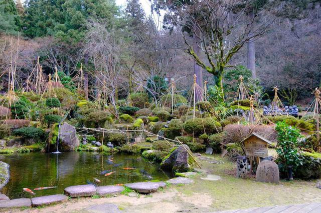画像: 翌朝、目覚め良く起きられました。これも宿の温泉のおかげでしょうか。空気がきれいな朝の時間に長生館のお庭を散策。今年は雪が少なく、雪つりもちょっと寂しい感じです。しかし池の鯉が鮮やかで、手入れされたとても良いお庭でした。