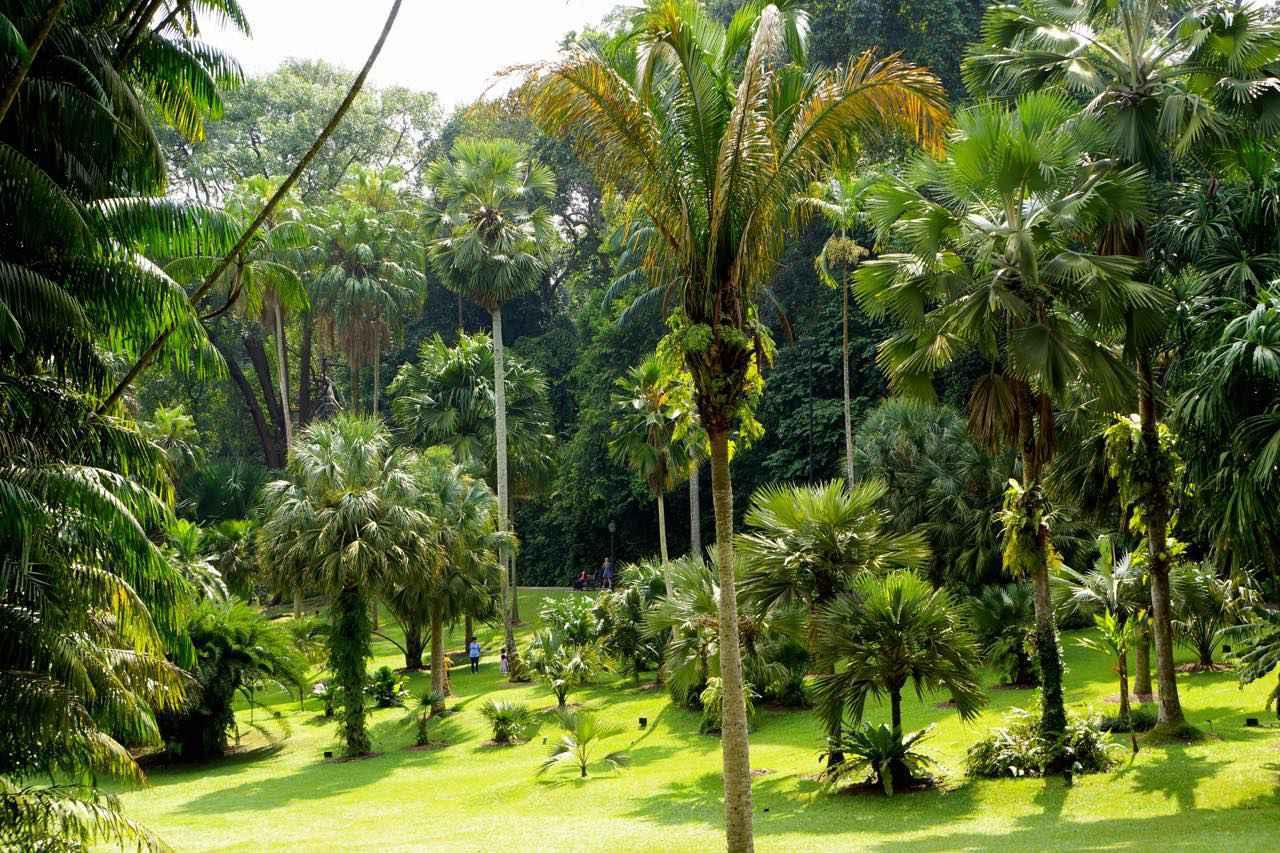 画像: 魅惑的な南国の花々や熱帯らしいスケールの大きな木々の間を散策