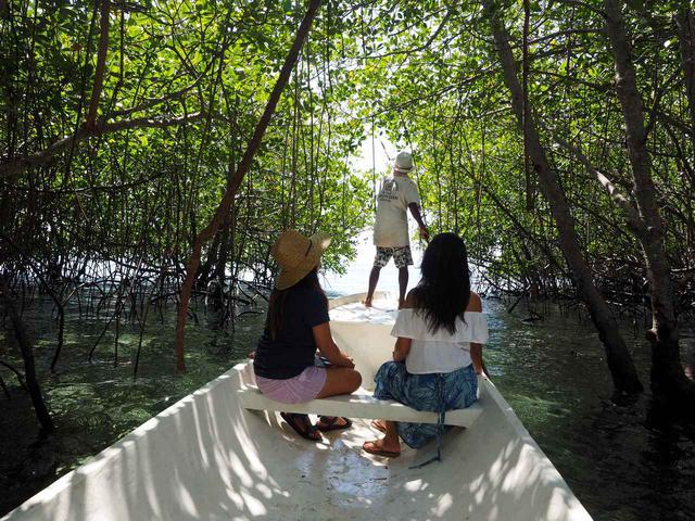 画像1: 4.【レンボンガン島】神秘的空気に包まれたマングローブの森をサップで散策