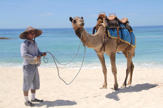 画像2: 1.【バリ・キャメル・サファリ】気分はまるでセレブ。ラクダに乗ってビーチをお散歩