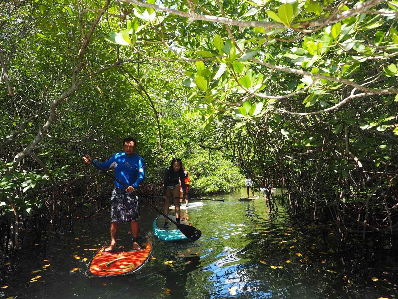画像2: 4.【レンボンガン島】神秘的空気に包まれたマングローブの森をサップで散策